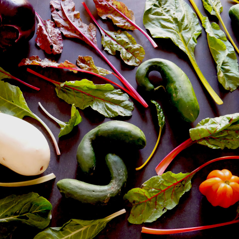 Il benessere e la salute attraverso la Biodiversità