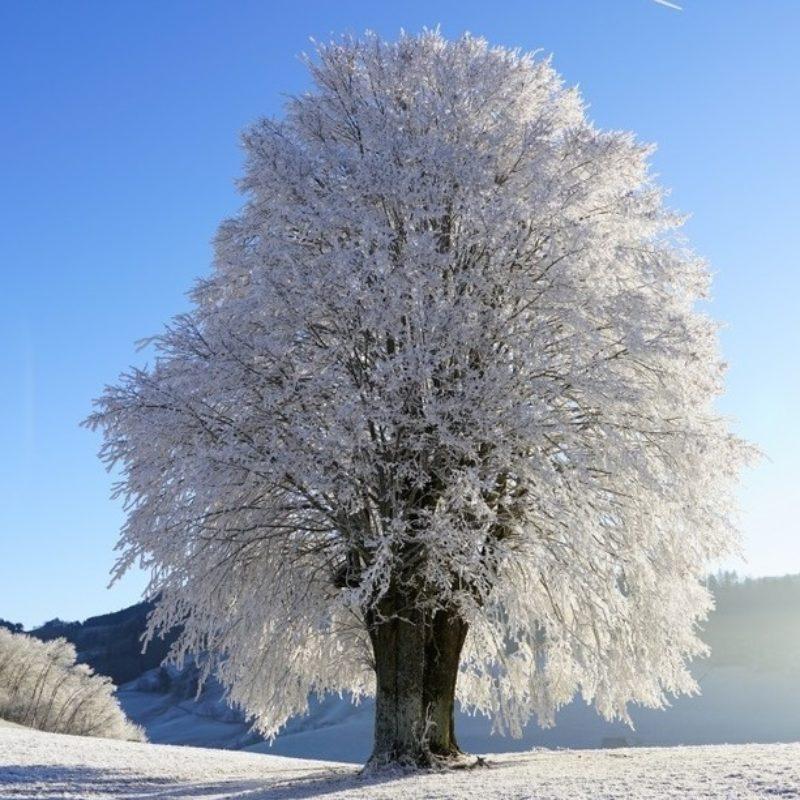 Inverno-Loggia Acqua